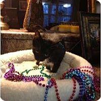 Adopt A Pet :: Jill - Mobile, AL