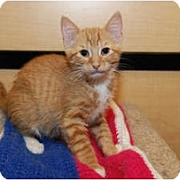 Adopt A Pet :: Logan - Farmingdale, NY