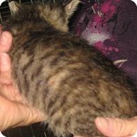 Adopt A Pet :: Cranberry - Dallas, TX