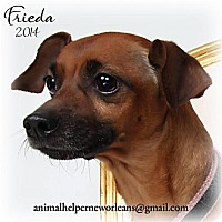 Adopt A Pet :: Frida - New Orleans, LA