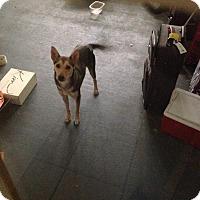 Adopt A Pet :: Amidala - Richmond, VA