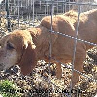 Adopt A Pet :: Sadie - Moulton, AL