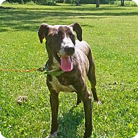 Adopt A Pet :: Buddy - Huntsville, TN