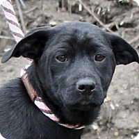 Adopt A Pet :: **SANDRA**MEET FEB 13TH! - Mukwonago, WI