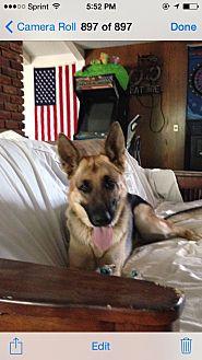 German Shepherd Dog Mix Dog for adoption in Studio City, California - Arte
