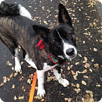 Adopt A Pet :: Sammi - Hayward, CA