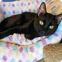 Adopt A Pet :: Benjamin McBean - Glendale, AZ