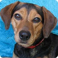 Adopt A Pet :: Jenny - Cuba, NY