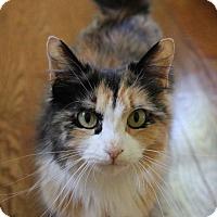 Adopt A Pet :: Cleo - Island Park, NY