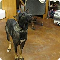 Adopt A Pet :: Henrene - Groton, MA