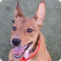 Adopt A Pet :: *HEARTS - Las Vegas, NV
