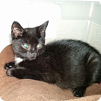 Adopt A Pet :: Justin (in CT) - Manchester, CT