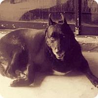 Adopt A Pet :: Sapphire - West Palm Beach, FL