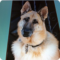 Adopt A Pet :: ANNIE VON ANNABURG - Los Angeles, CA