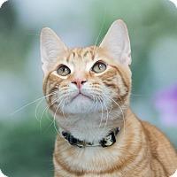 Adopt A Pet :: Fisher - Houston, TX
