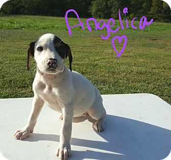 Beagle Mix Puppy for adoption in Sussex, New Jersey - Angelica I WAS ABANDONED