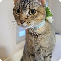 Adopt A Pet :: NATALIE - SUPER SOCIAL & SWEET - Plano, TX