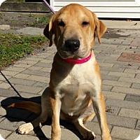 Adopt A Pet :: Mimi - Calverton, NY