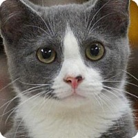 Adopt A Pet :: Loki (39901) - Little Rock, AR