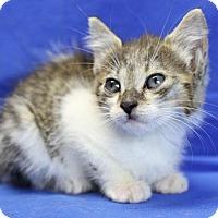 Adopt A Pet :: Matilda - Winston-Salem, NC
