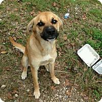 Adopt A Pet :: Brooklyn - Fort Atkinson, WI
