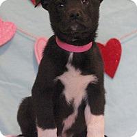 Adopt A Pet :: Mabel - Waldorf, MD
