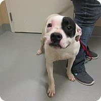 Adopt A Pet :: Ruby - Cumming, GA