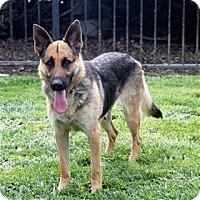 Adopt A Pet :: KYLIE - Pleasanton, CA