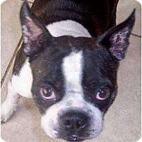 Adopt A Pet :: Jiggs - Temecula, CA