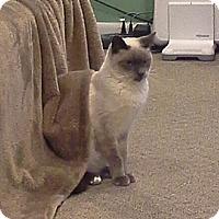 Adopt A Pet :: Simmi - Raritan, NJ