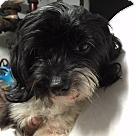 Adopt A Pet :: Diana