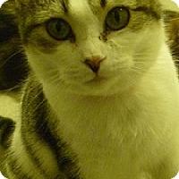 Adopt A Pet :: Kerry - Hamburg, NY
