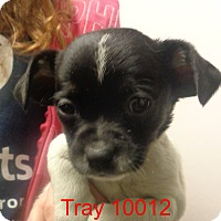 Adopt A Pet :: Trey - baltimore, MD