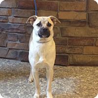 Adopt A Pet :: Bullet - River Falls, WI