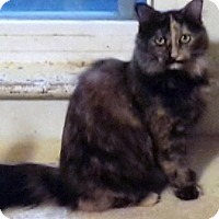 Adopt A Pet :: Yoko - Morganton, NC