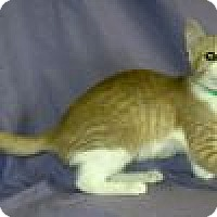 Adopt A Pet :: Krissy - Powell, OH