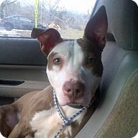 Adopt A Pet :: Sassy - Kimberton, PA