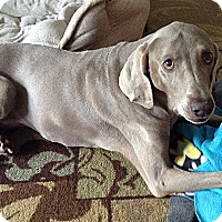 Adopt A Pet :: Phoebe - Grand Haven, MI