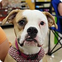 Adopt A Pet :: Charlotte (courtesy kari) - Homestead, FL