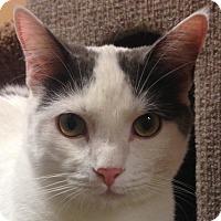 Adopt A Pet :: Nala - Winchester, CA