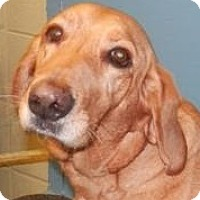 Adopt A Pet :: Danny - Baltimore, MD