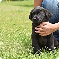 Adopt A Pet :: waldon - Groton, MA