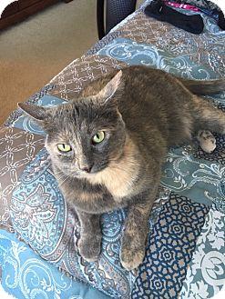 Calico Cat for adoption in Lithia, Florida - Faith