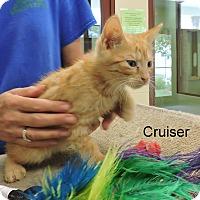Adopt A Pet :: Cruiser - Slidell, LA