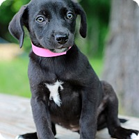 Adopt A Pet :: Amelia - Waldorf, MD
