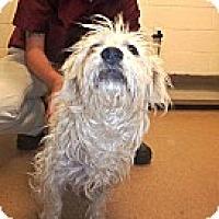 Adopt A Pet :: Tucker - Las Vegas, NV
