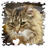 Adopt A Pet :: CiCi - Harrisburg, NC