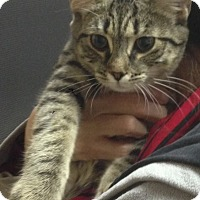 Adopt A Pet :: Leah - Huntley, IL