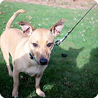 Adopt A Pet :: Ruby - Long Beach, NY