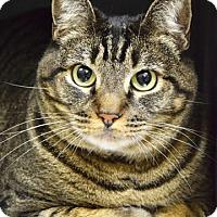 Adopt A Pet :: Rosalee - Dublin, CA